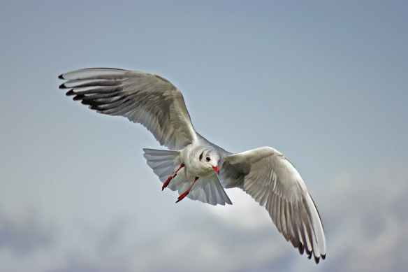 bird flying animal seagull